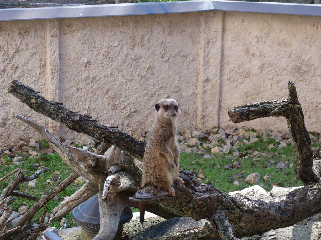 palic zoo vrt